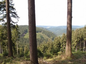 Fichten-Panorama