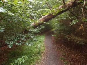 Urwaldsteig 2