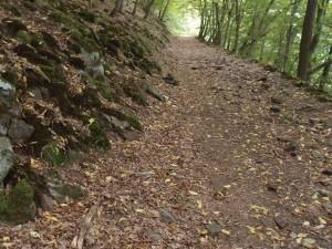 Urwaldsteig 3