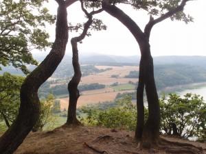 Urwaldsteig 4