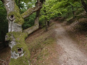 Urwaldsteig 5