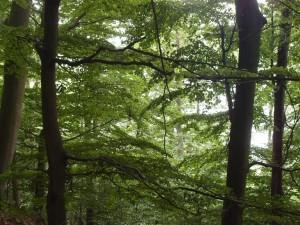 Urwaldsteig 7