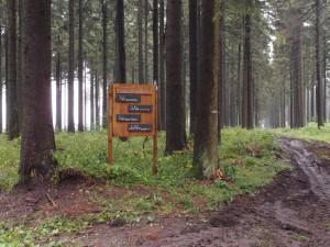 Denken im Wald