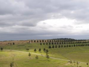Neue Landschaft